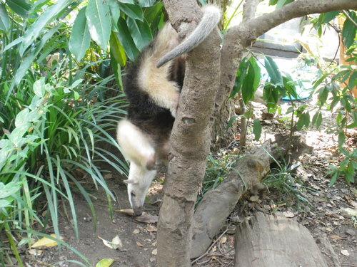動物園~♪_c0231772_11433293.jpg