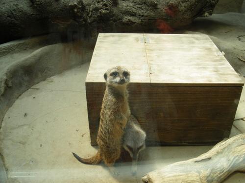 動物園~♪_c0231772_11442825.jpg