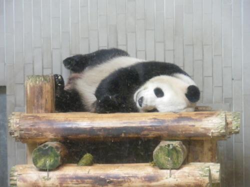 動物園~♪_c0231772_11444943.jpg