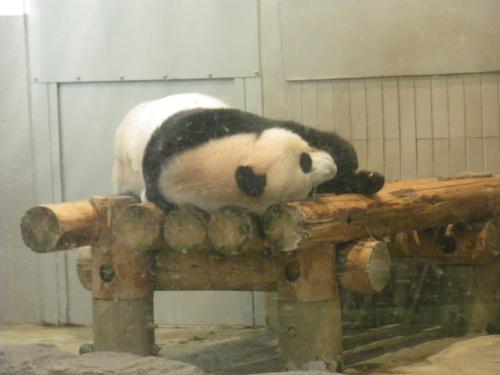 動物園~♪_c0231772_11451088.jpg