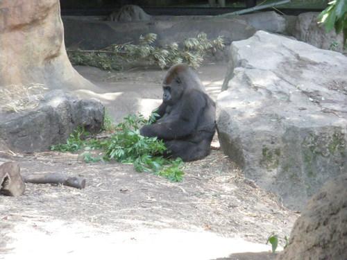 動物園~♪_c0231772_11502159.jpg