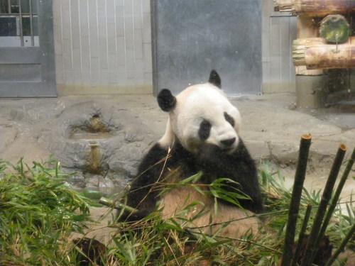 動物園~♪_c0231772_12233134.jpg