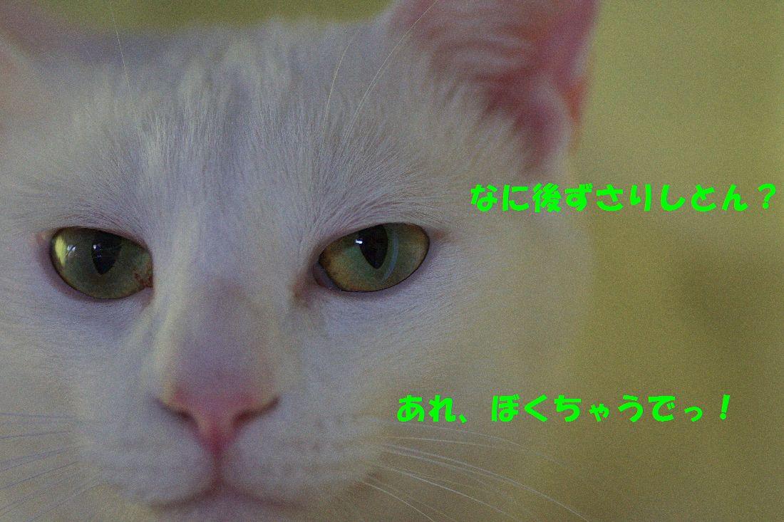 f0197682_22462254.jpg