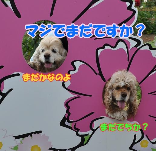 b0067012_18242069.jpg