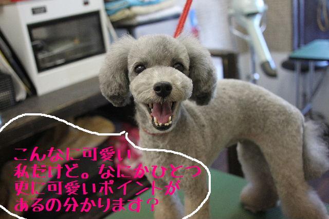 年末年始の予約開始しまぁ~す!!_b0130018_2351912.jpg
