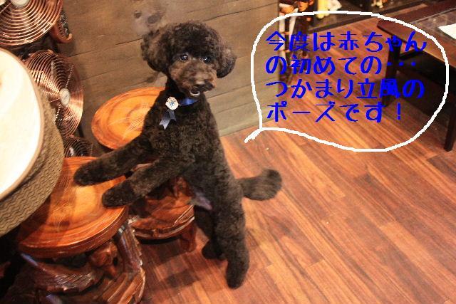 年末年始の予約開始しまぁ~す!!_b0130018_2365512.jpg