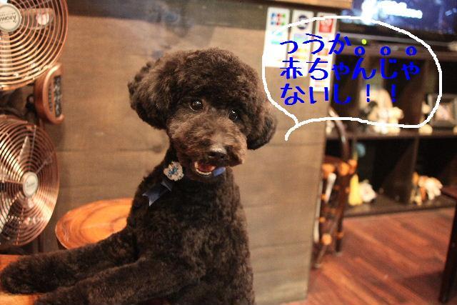 年末年始の予約開始しまぁ~す!!_b0130018_237325.jpg