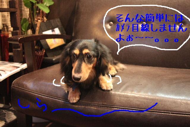 年末年始の予約開始しまぁ~す!!_b0130018_2383631.jpg