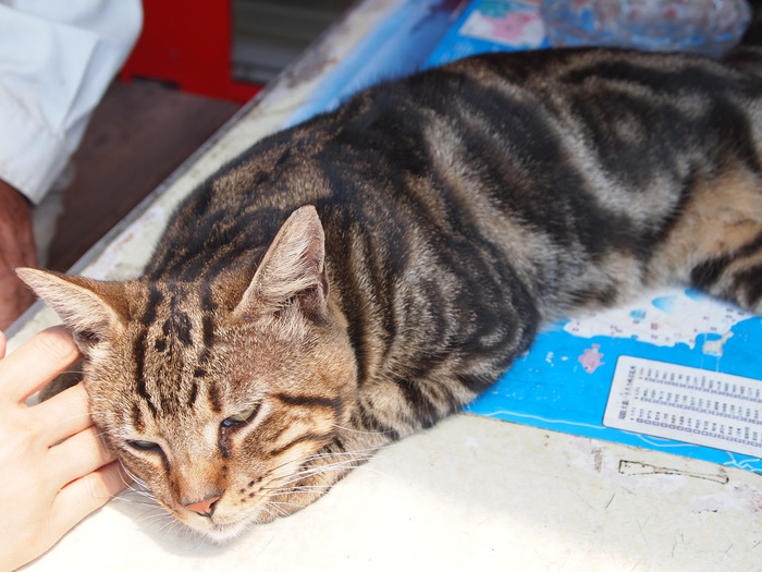 猫ちゃんとの出愛☆_f0183846_1534159.jpg