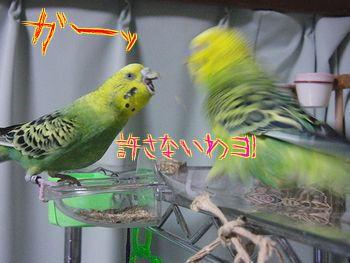 f0196665_8535936.jpg