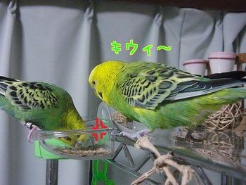 f0196665_853777.jpg