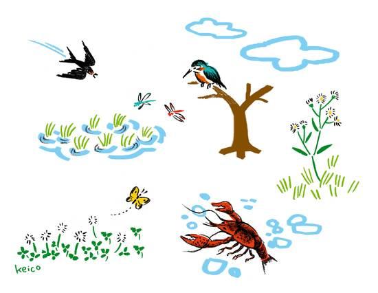 ワークショップ「守谷の自然を描いてみよう!」_f0154216_179282.jpg