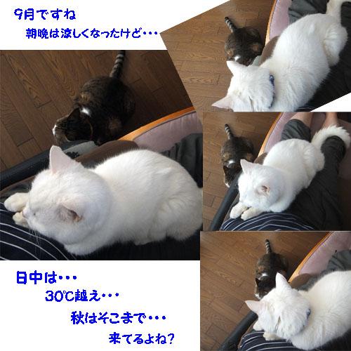 f0032418_11133690.jpg