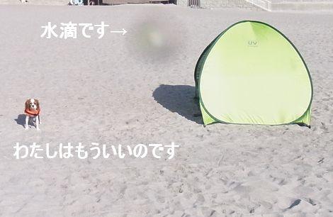 f0214121_1156865.jpg