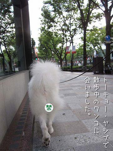 土曜日おじ散歩2連発_c0062832_6113458.jpg