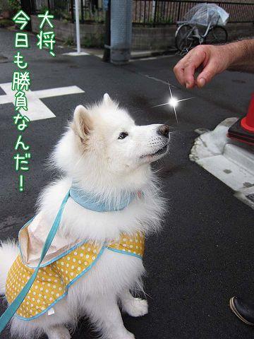土曜日おじ散歩2連発_c0062832_7113464.jpg