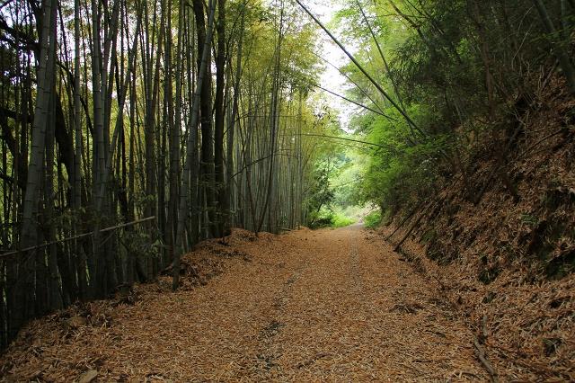 阿戸町舛越を歩く 2012年版 その5 さらに林道を進む_b0095061_8402365.jpg