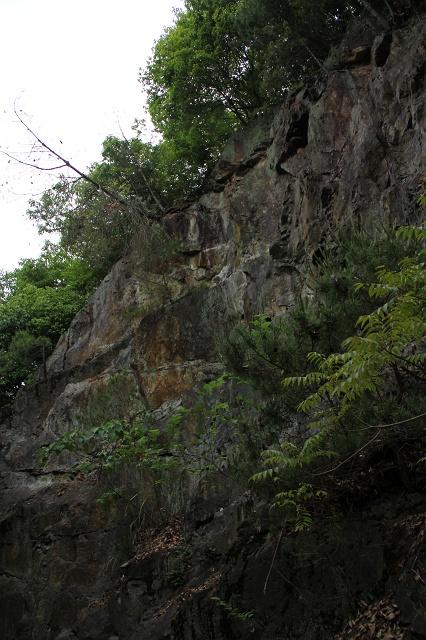 阿戸町舛越を歩く 2012年版 その5 さらに林道を進む_b0095061_8403511.jpg