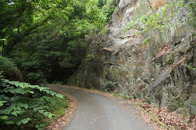阿戸町舛越を歩く 2012年版 その5 さらに林道を進む_b0095061_8403695.jpg