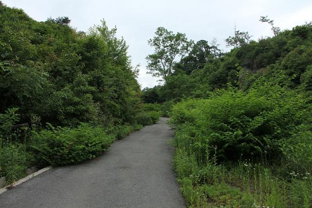 阿戸町舛越を歩く 2012年版 その5 さらに林道を進む_b0095061_8413456.jpg