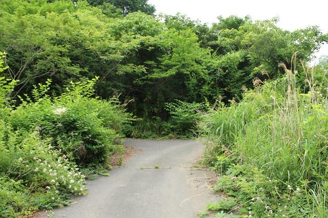 阿戸町舛越を歩く 2012年版 その5 さらに林道を進む_b0095061_8434598.jpg