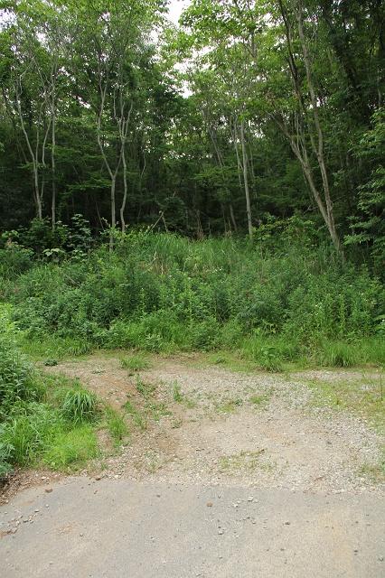 阿戸町舛越を歩く 2012年版 その5 さらに林道を進む_b0095061_8464184.jpg