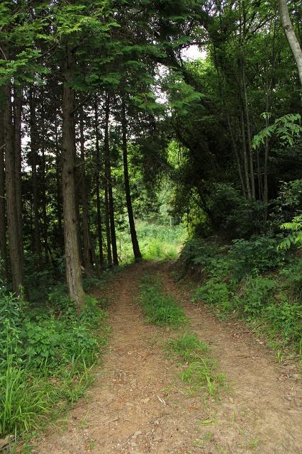 阿戸町舛越を歩く 2012年版 その5 さらに林道を進む_b0095061_8471428.jpg