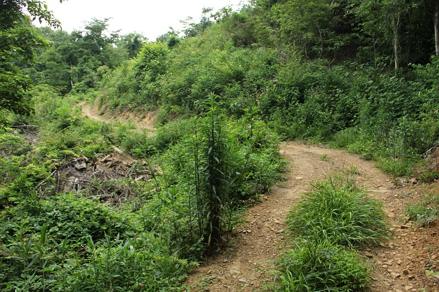 阿戸町舛越を歩く 2012年版 その5 さらに林道を進む_b0095061_847193.jpg