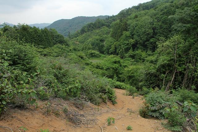 阿戸町舛越を歩く 2012年版 その5 さらに林道を進む_b0095061_848467.jpg