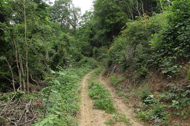 阿戸町舛越を歩く 2012年版 その5 さらに林道を進む_b0095061_8492985.jpg