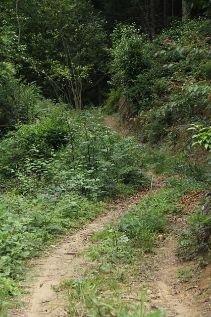阿戸町舛越を歩く 2012年版 その5 さらに林道を進む_b0095061_8495937.jpg