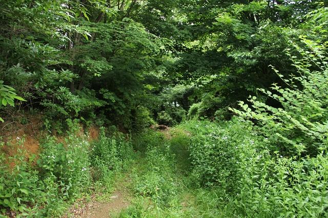 阿戸町舛越を歩く 2012年版 その5 さらに林道を進む_b0095061_8505967.jpg