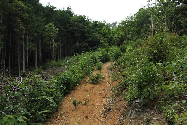 阿戸町舛越を歩く 2012年版 その5 さらに林道を進む_b0095061_8552228.jpg
