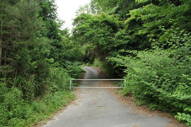 阿戸町舛越を歩く 2012年版 その5 さらに林道を進む_b0095061_8564598.jpg