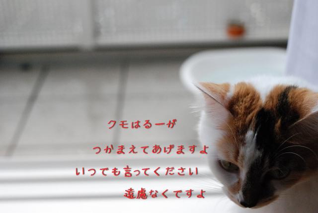 a0266372_2010295.jpg