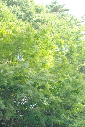 軽井沢へ行きました_a0115684_21382828.jpg