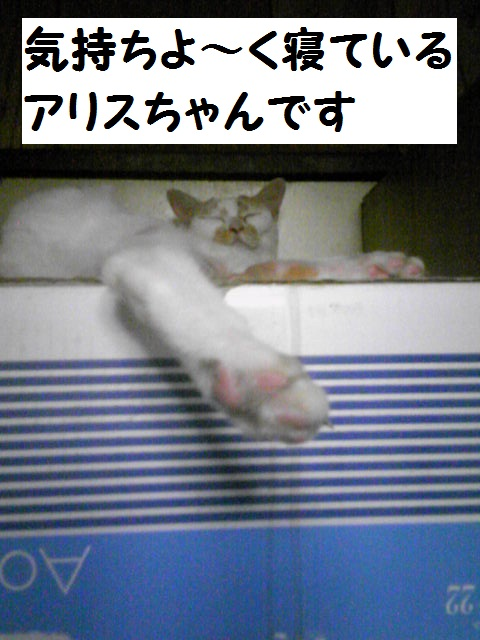 a0232197_19545226.jpg