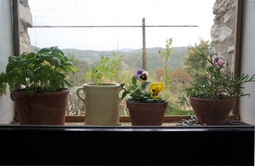 花のある窓辺_f0106597_21145196.jpg