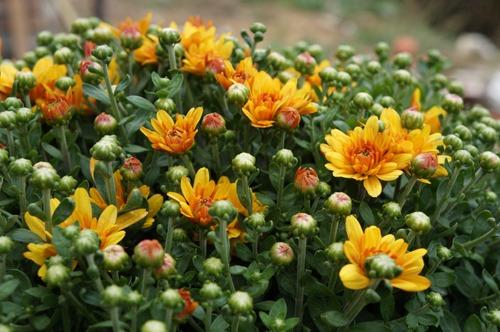 花のある窓辺_f0106597_2162962.jpg