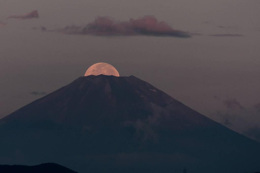 ムナグロ(ウズラシギ)/超珍しいパール富士_b0024798_632106.jpg