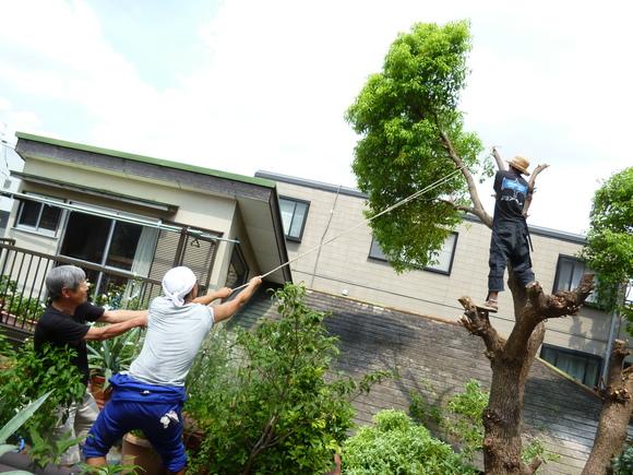 庭のクスノキを切りました!_a0080406_1241139.jpg