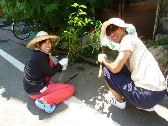 庭のクスノキを切りました!_a0080406_12424649.jpg