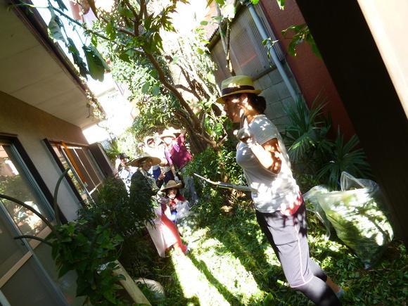 庭のクスノキを切りました!_a0080406_1244281.jpg