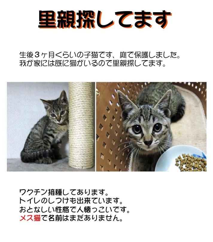 【猫】募集中です_f0141609_22212382.jpg