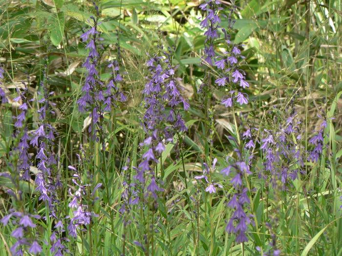 八幡湿原_f0219710_110316.jpg