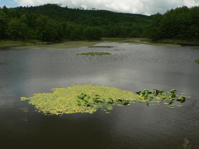 八幡湿原_f0219710_1134974.jpg