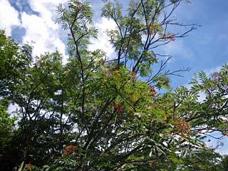 明石谷支流ナラ谷大滝から明石1141.3m_a0133014_1816167.jpg