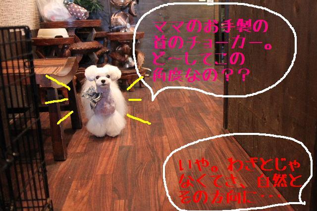 b0130018_010243.jpg