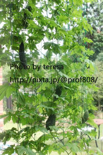 f0165721_2043872.jpg