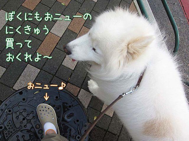 日曜涼しい朝散歩♪_c0062832_5141563.jpg